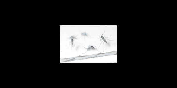 Les moustiques belges au rapport - La Libre