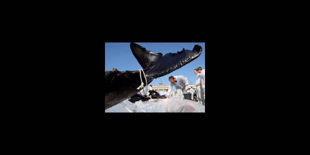 Pour que voguent les baleines... - La Libre