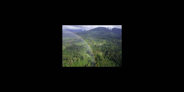Après Bali, la forêt aura un prix - La Libre
