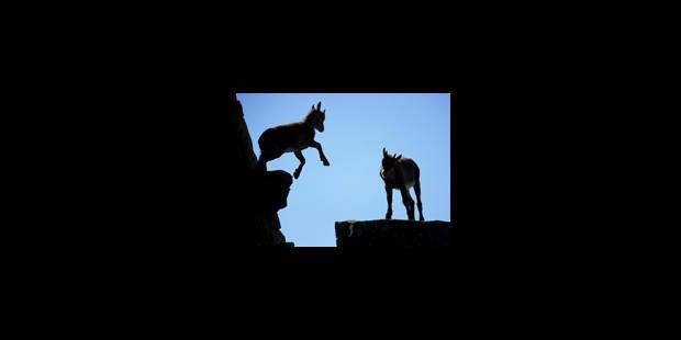 Espèces d'explorateurs - La Libre
