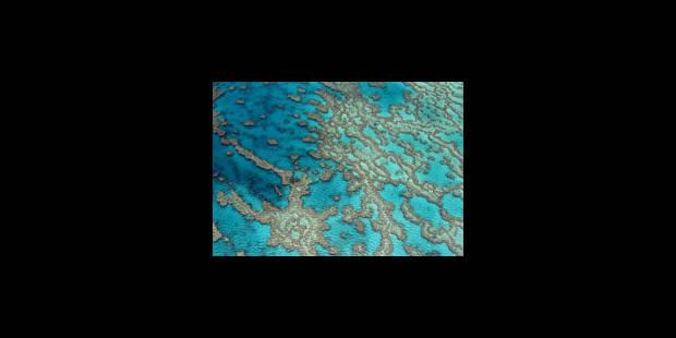 Une banque du sperme pour la Grande barrière de corail - La Libre