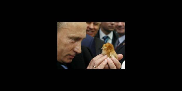 """""""Poutine et le poussin"""", """"Poutine et les enfants"""" - La Libre"""