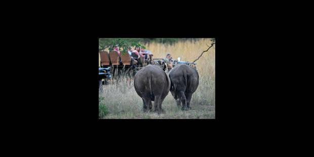 Le rhino, traqué jusqu'en Europe - La Libre