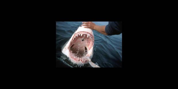 L'attaque d'un requin relance le débat sur son statut d'espèce protégée - La Libre