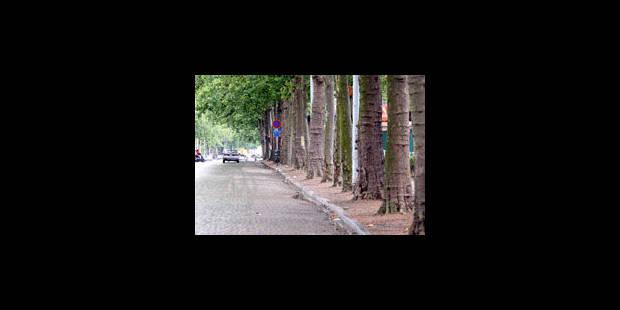 Protéger les arbres de l'avenue du Port et de l'avenue Louise - La Libre