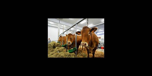 Libramont: soleil et bain de foule à défaut de concours bovins - La Libre