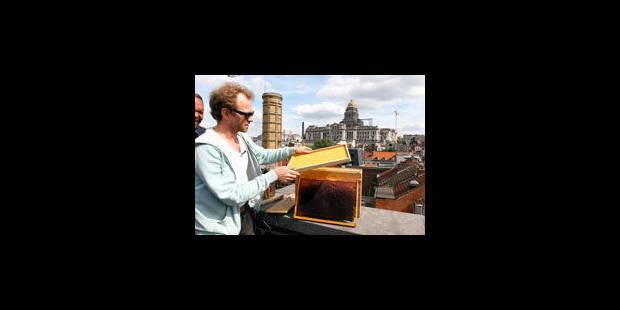 Des abeilles sur les toits - La Libre