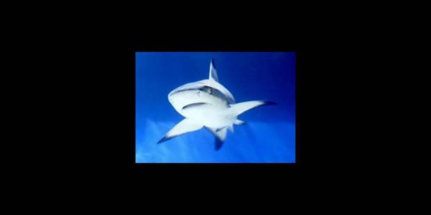 Un écologiste va nager sur le site d'attaques de requin - La Libre