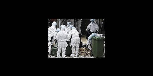 Le virus H5N1 détecté dans un élevage allemand - La Libre