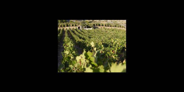 Les vignerons belges toujours plus nombreux - La Libre