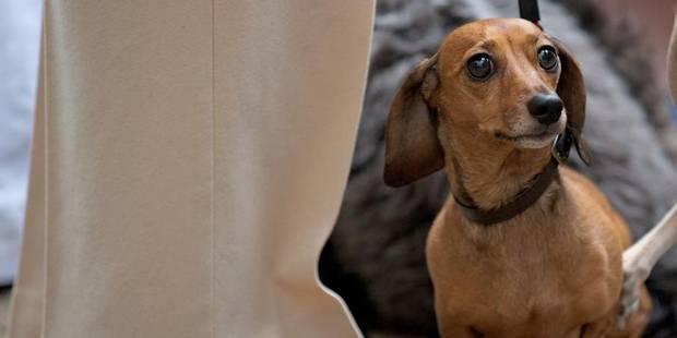 Comment voit un chien ? Tout savoir (et voir) sur la vision des animaux - La Libre