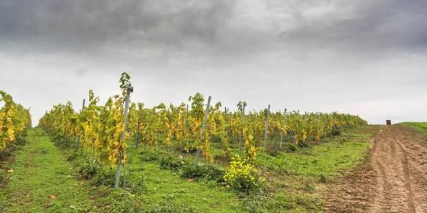 La renaissance du vin à Liège - La Libre