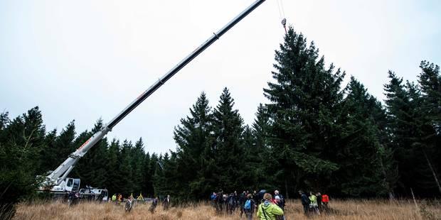 Noël: le sapin de la Grand-Place a été abattu à Baelen - La Libre