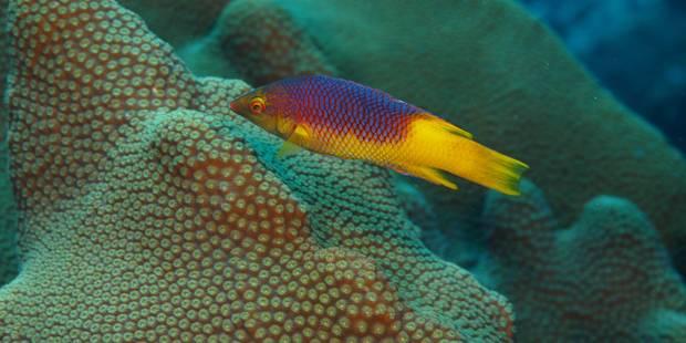 Dans près d'un milliard d'années, les océans se seront évaporés - La Libre