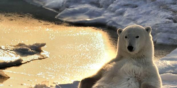 Ces climatosceptiques qui brassent des milliards - La Libre