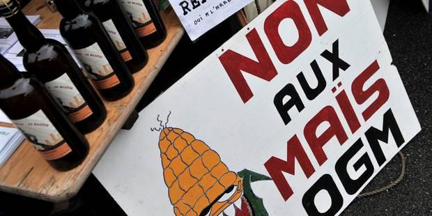 À interdire ou pas, le maïs OGM? - La Libre