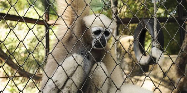 Ce zoo où les animaux meurent mystérieusement - La Libre