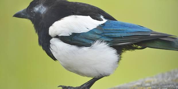 L'Europe a perdu 421 millions d'oiseaux en 30 ans - La Libre