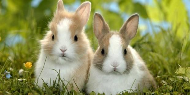 Gaia porte plainte contre un étudiant après la mort de deux lapins - La Libre