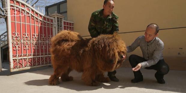 Fabulous Quel est le prix du chien le plus cher du monde? - La Libre SO38