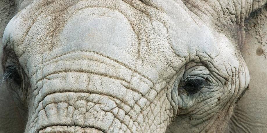 Les braconniers aussi sont chassés: la traque des trafiquants d'ivoire au Gabon - La Libre