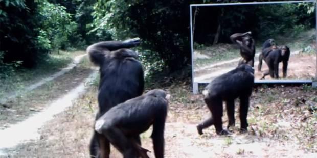 Des animaux sauvages se retrouvent pour la première fois face à un miroir - La Libre