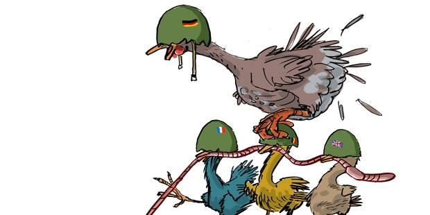 Horde de poules : en formation de combat ! - La Libre