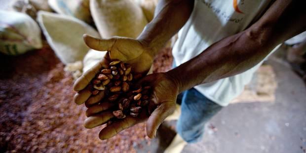 Côte d'Ivoire: près de 50 enfants victimes de trafic secourus dans les plantations de cacao - La Libre