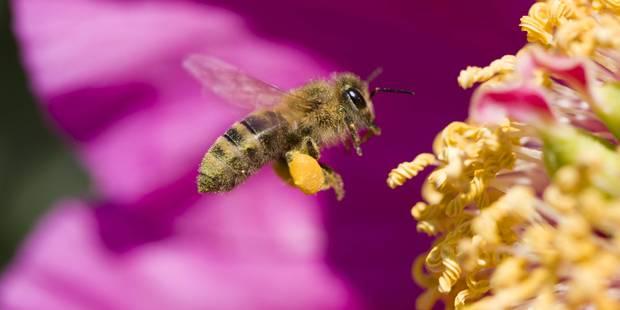 """Une """"autoroute"""" pour sauver les abeilles à Oslo - La Libre"""