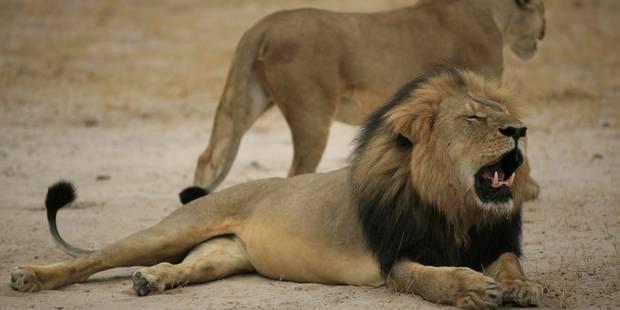 Zimbabwe: un riche dentiste américain fait scandale en tuant le lion préféré des touristes - La Libre
