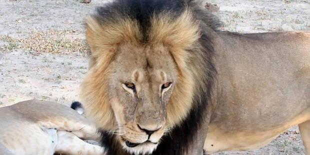 """Mort du lion Cecil: """"rien d'illégal"""" selon l'organisateur du safari - La Libre"""