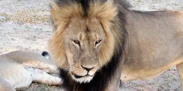 Un autre chasseur américain suspecté d'avoir braconné un lion au Zimbabwe - La Libre