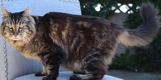 Voici le plus vieux chat du monde (VIDEO) - La Libre