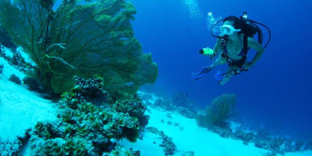 La crème solaire endommage les récifs coralliens - La Libre