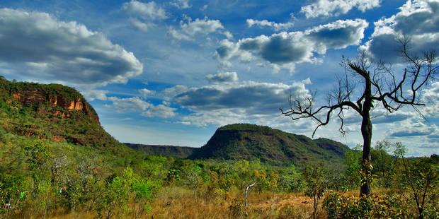 La déforestation silencieuse de la savane brésilienne - La Libre