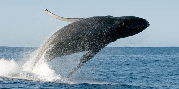 Des baleiniers japonais en route vers l'Antarctique - La Libre