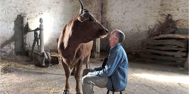 """""""La Vache"""" : Pas une bouse, plutôt une fleurette fanée - La Libre"""