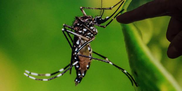 Premier décès lié au Zika sur le sol américain, à Porto Rico - La Libre