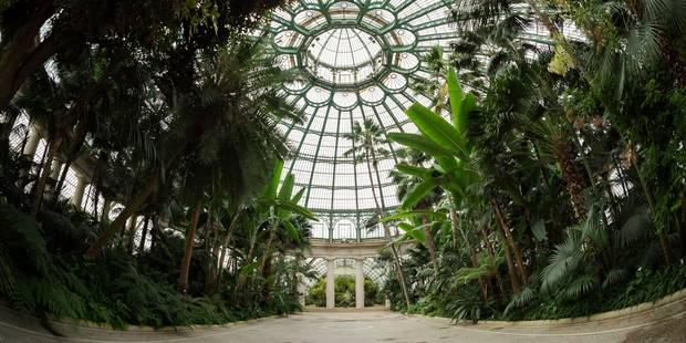 Un collectif citoyen sensibilise les visiteurs des serres royales au passé colonial belge - La Libre