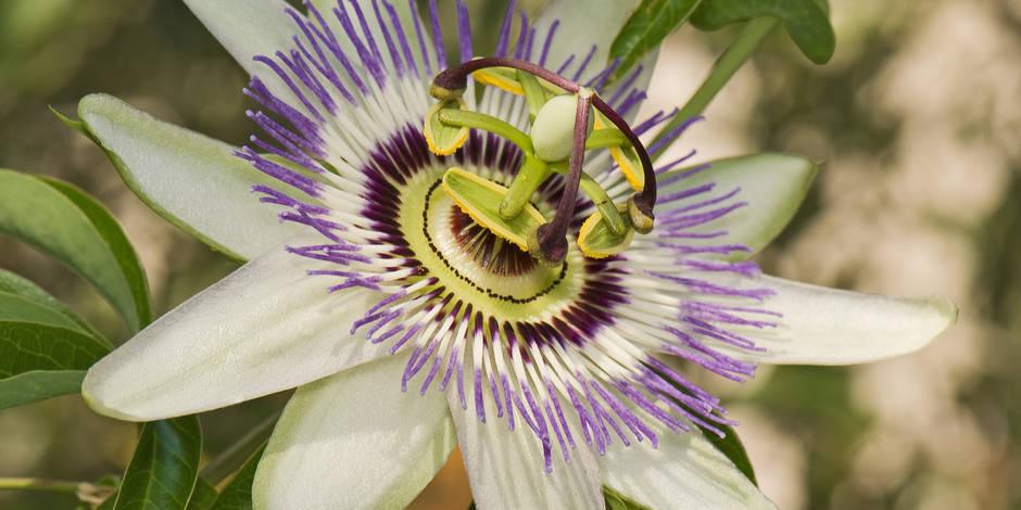 Cancer: la place des aiguilles et des plantes - La Libre