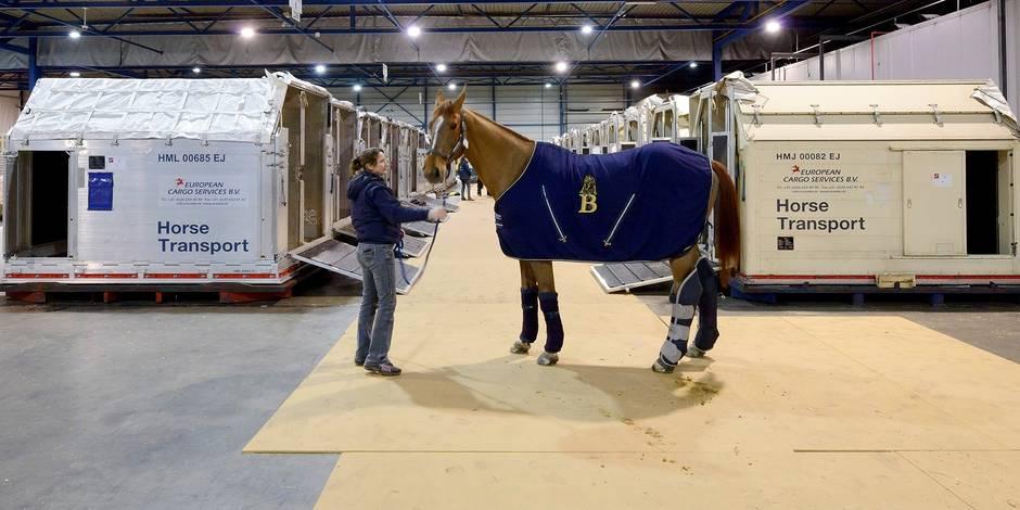"""Hébergement pour chevaux à Liège Airport: un """"hôtel"""" vraiment nécessaire? - La Libre"""