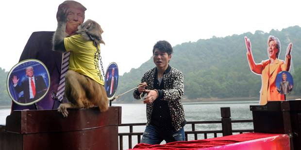 En Chine, un singe devin prédit la victoire de Trump - La Libre
