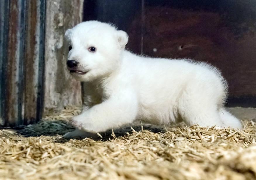 Il était né le 3 novembre au zoo de Berlin