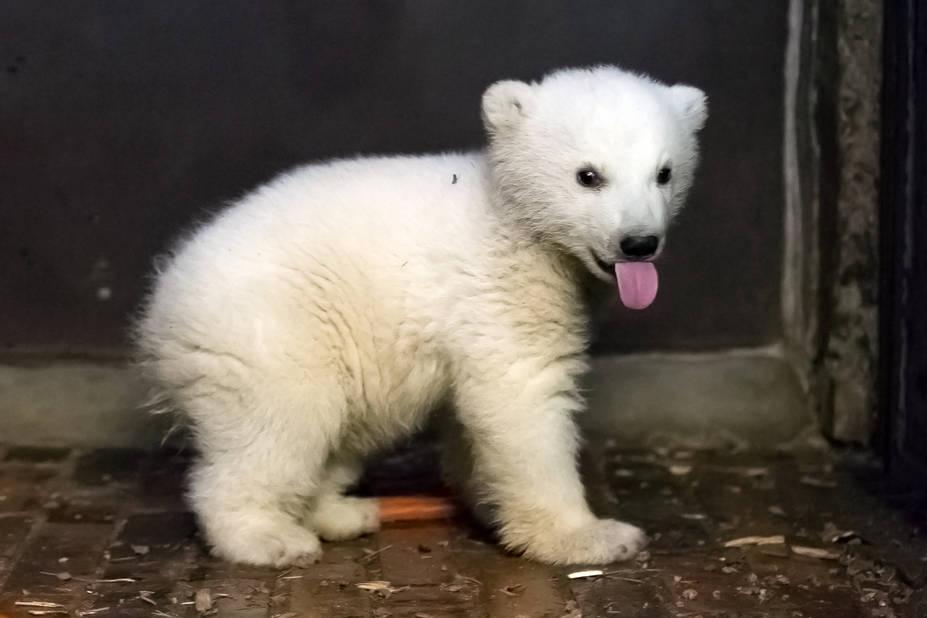 Fritz devait être autopsié mardi matin afin de connaître les causes précises de sa mort, précise le zoo.