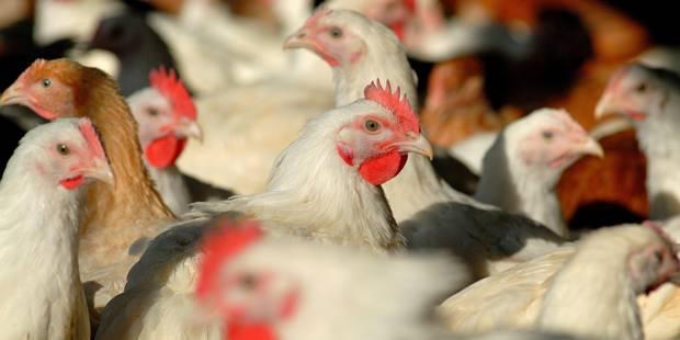 Se nourrir sans viande n'est pas renoncer au plaisir (OPINION) - La Libre