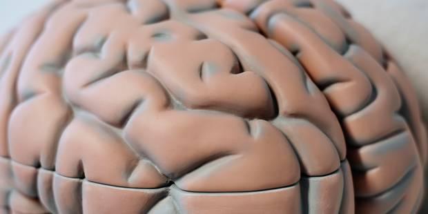 Mais comment donc les prions arrivent-ils à envahir le cerveau? - La Libre