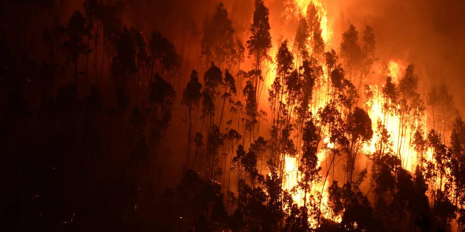 La chaleur attise l'incendie au Portugal, qu'en est-il chez nous? - La Libre