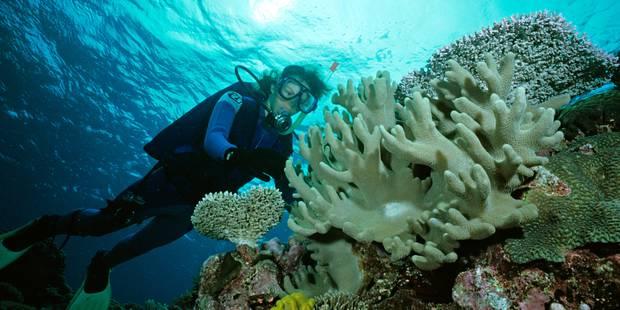 A votre avis, combien vaut la Grande barrière de corail? - La Libre