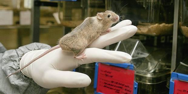 La communauté scientifique inquiète pour l'expérimentation animale en Wallonie - La Libre