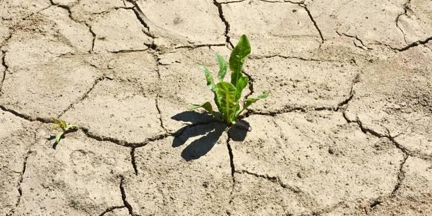 2016, nouvelle année noire pour le climat - La Libre